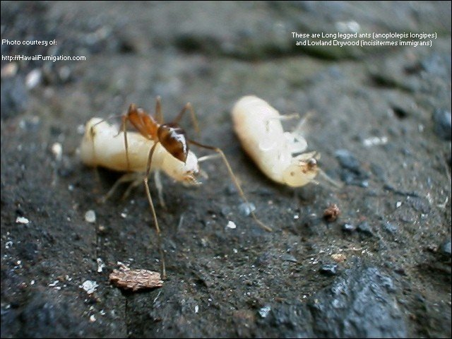 Termites And Their Control United Exterminating Company Cherry Hill Nj