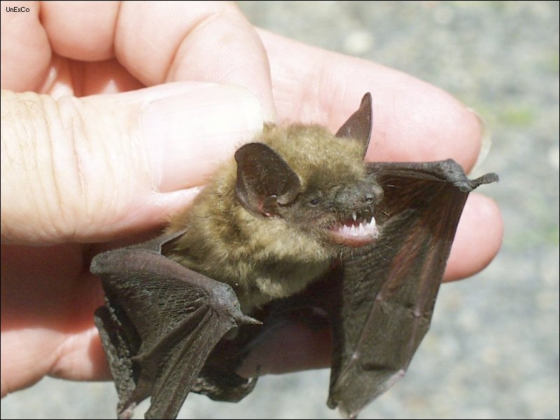 Photos of Bat Bites http://www.keywordpictures.com/keyword/bat%20bite%20marks/