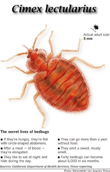 Actual Size Of Bed Bugs White Bed